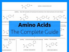 amino acids complete guide
